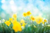 Spring flowers blossom against sunny blue sky