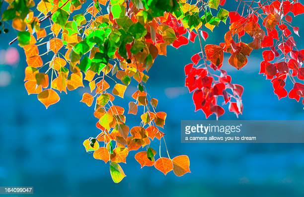 Multi colored leaves