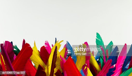 Multicolored feathers on white background : Stock Photo