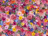 Wall made of multi-colored, colorful flowers.