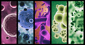 A combined image of various micro organisms in colorhttp://195.154.178.81/DATA/istock_collage/0/shoots/785093.jpg