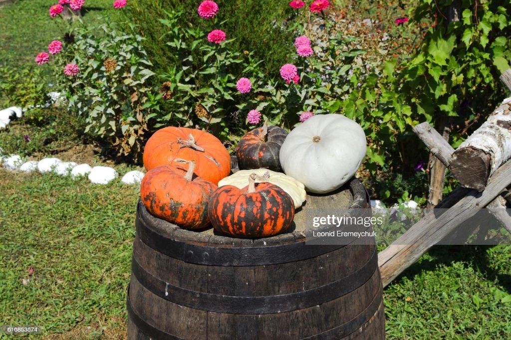 Multicolored pumpkins on a wooden barrel : Stock Photo
