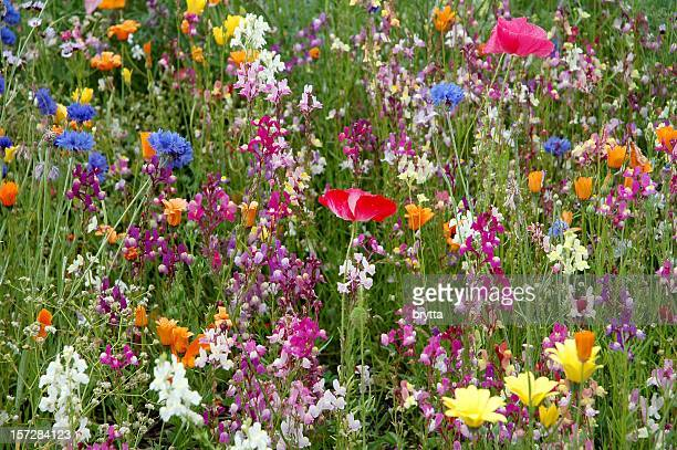Multicolored wildflowers  in the summer  meadow