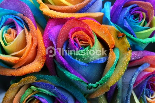 Roses Multicolore Arcenciel Photo Thinkstock