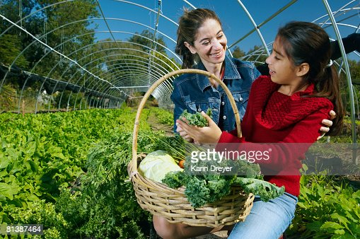 Multi-ethnic mother and daughter harvesting organic produce : Stock Photo