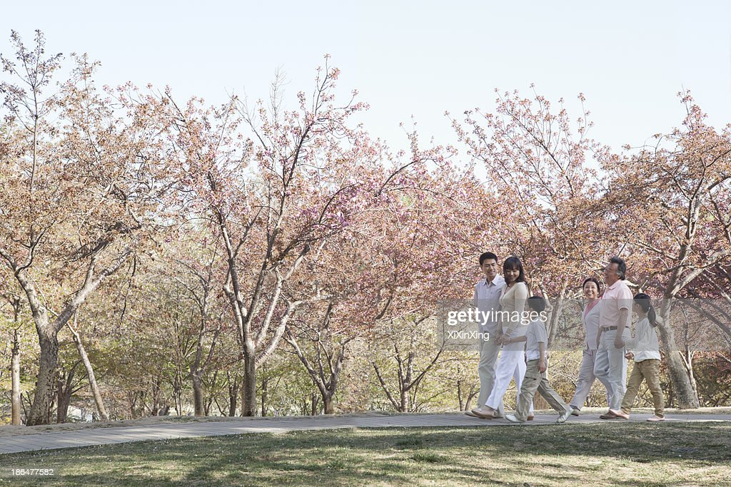 Multi-generational family taking a walk amongst the cherry trees in a park in springtime, Beijing : Stock Photo
