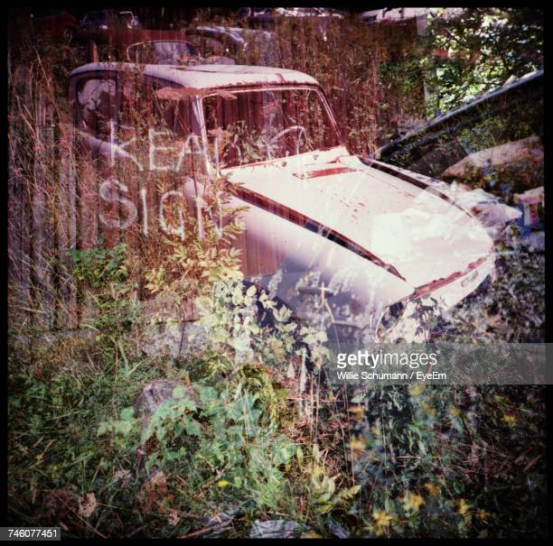 Multiple Exposure Of Abandoned Cars With Text And Plants