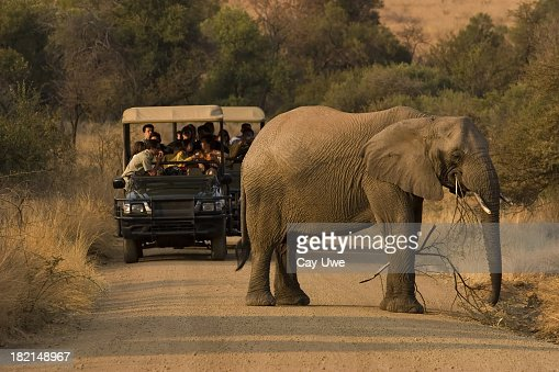 Safari Animals Stock Photos And Pictures