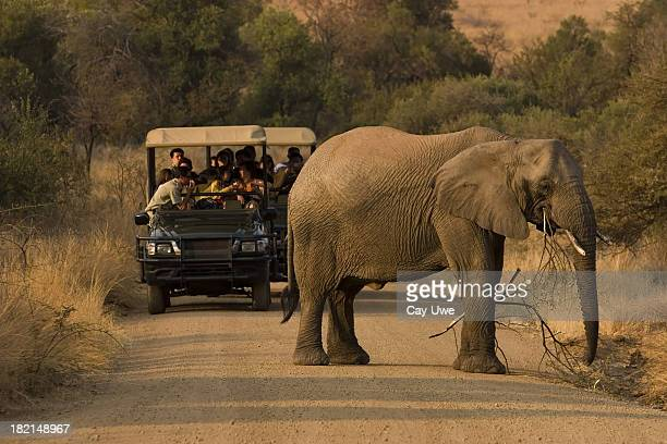 Multiple people on a safari viewing an elephant