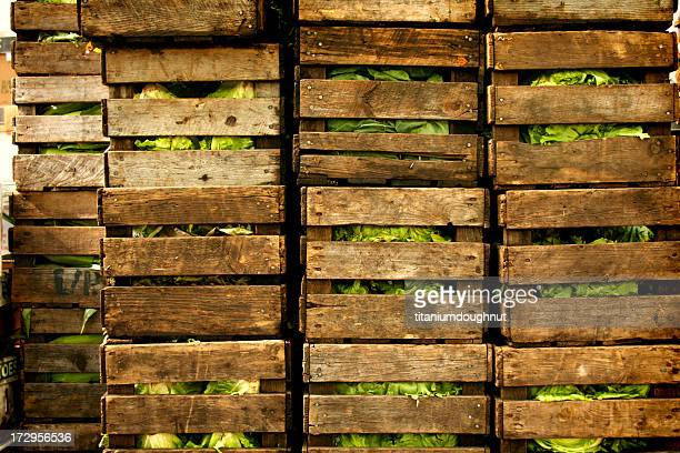 Multiple wooden crates stacked with cabbage
