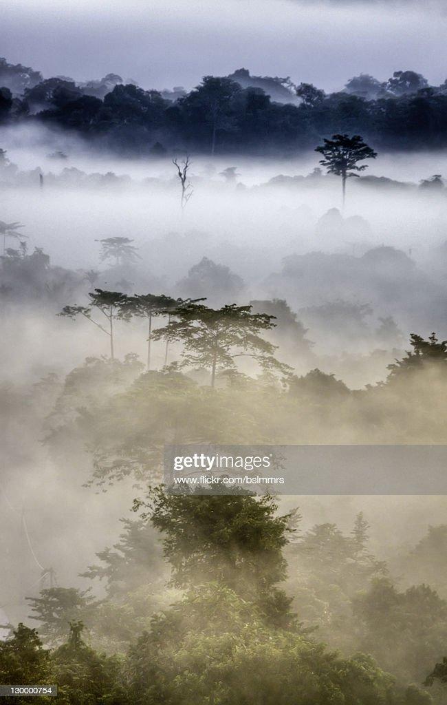 Mulu morning mist