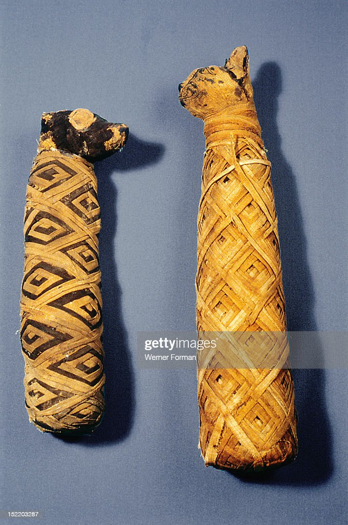 Mummy of a dog and of a cat Egypt Pharaonic