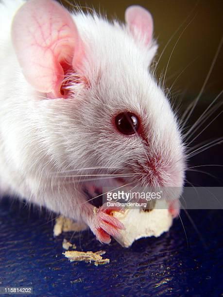 Munching Mouse