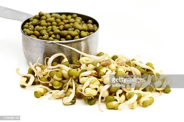Mung bean sprouts and seeds