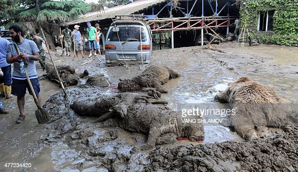 A municipal worker stands near dead animals at a flooded zoo in the Georgian capital Tbilisi on June 15 2015 Lions tigers and even a hippopotamus...