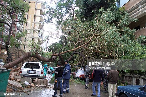 Municiple workers remove a downed tree in the Lebanese capital Beirut on January 7 following a night of high winds and heavy rain fall AFP PHOTO/MIKE...