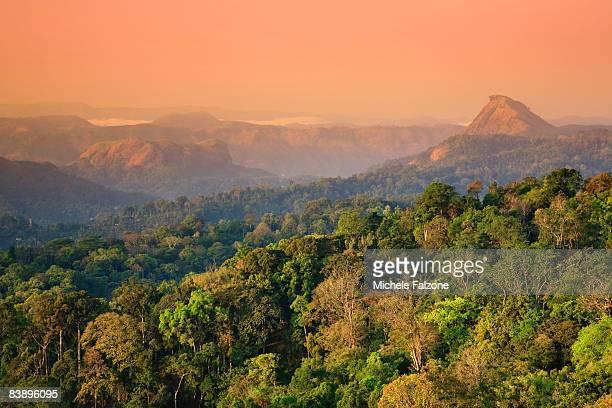 Munnar rolling hills and Tea Plantations, dawn