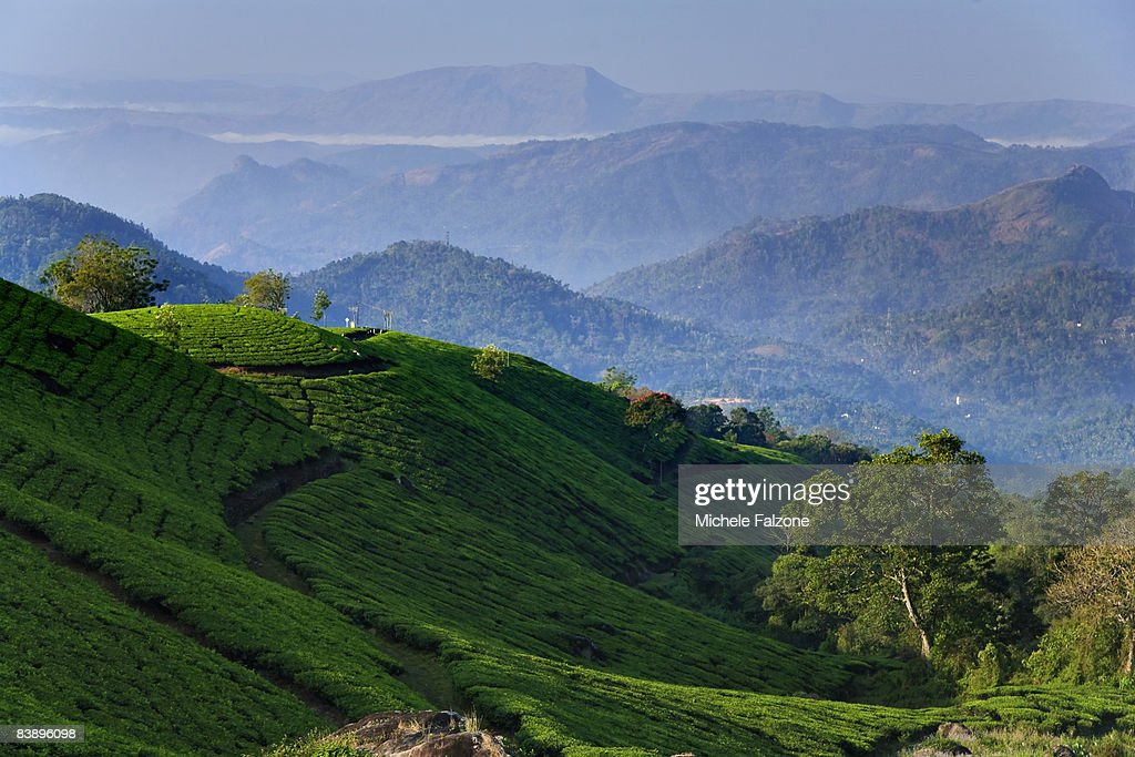 Munnar rolling hills and Tea Plantations, dawn : Stock Photo