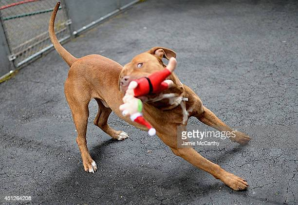 Muscle ID #A1000287 at New York Animal Care And Control on June 25 2014 in New York City