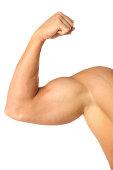 Muscular bicepshttp://www.twodozendesign.info/i/1.png