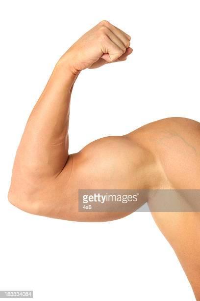 Muscular biceps