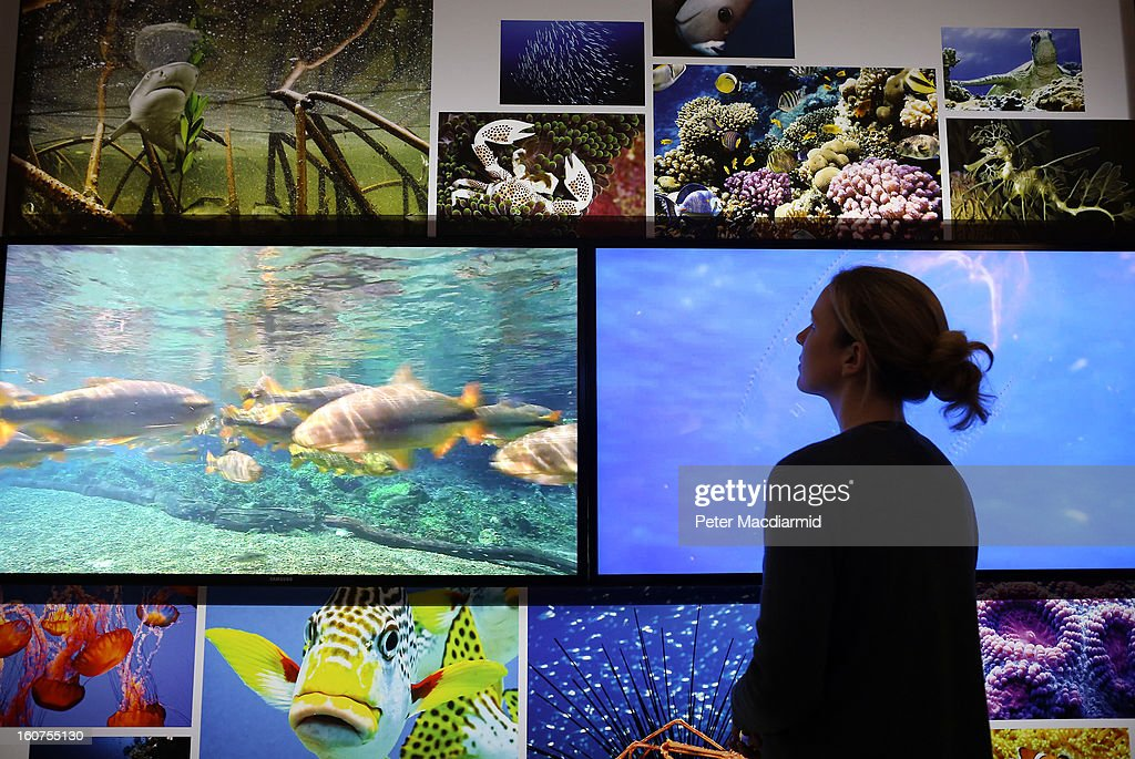 A museum employee looks at video display screens at the 'Extinction: Not the End of the World?' exhibition at The Natural History Museum on February 5, 2013 in London, England. More than 99 percent of species that once roamed the planet are now extinct. Organisers of the exhibition hope to show that a diverse range of plants and animals survived. 80 Museum specimens are on display from February 8-8, September 2013.