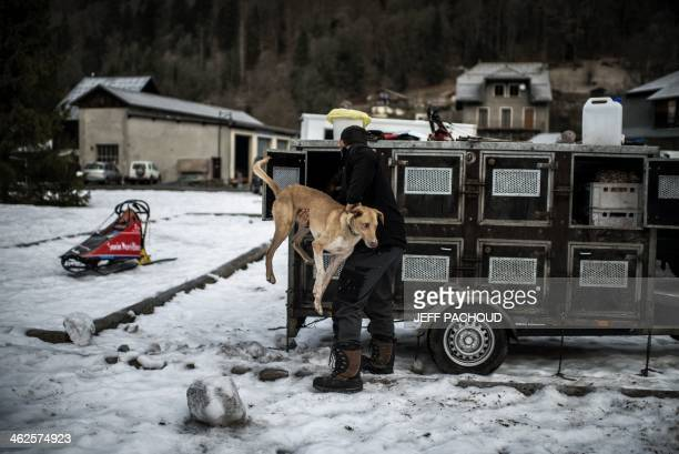 A musher takes care of a dog before the start of a stage of the Grande Odyssee sledding race across the Alps on January 13 2014 in SixtFeraCheval AFP...