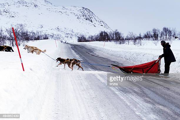 Musher with a dogsled  crossing the icy road in Norway