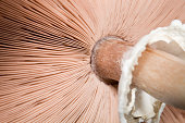 Mushroom from Below