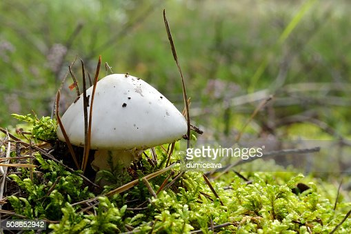 mushroom in forest : Stock Photo