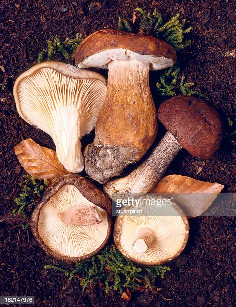 Sélection de champignons