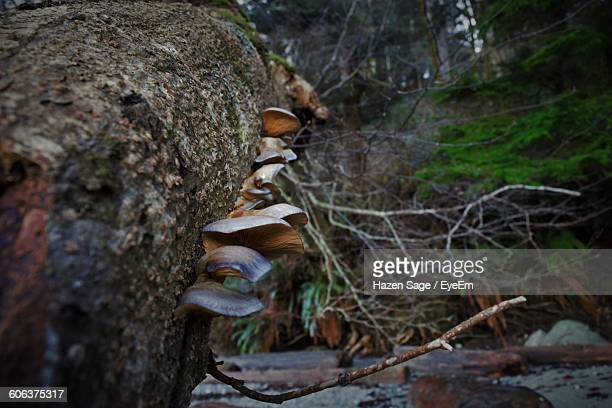 Mushrooms Growing On Fallen Tree In Forest