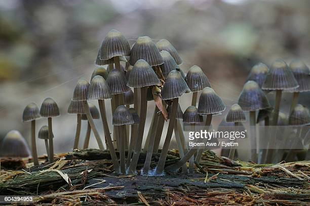 Mushrooms Growing On Field