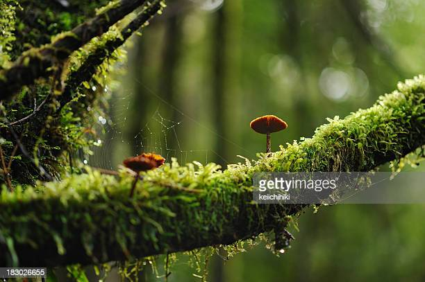 Mushrooms on a mossy branch in the woods