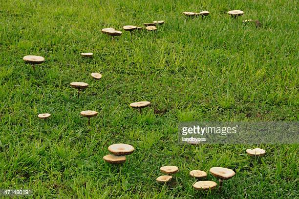Mushrooms on lawn