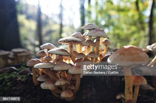Mushrooms On Tree In Forest