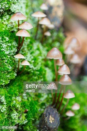 Cogumelos : Foto de stock