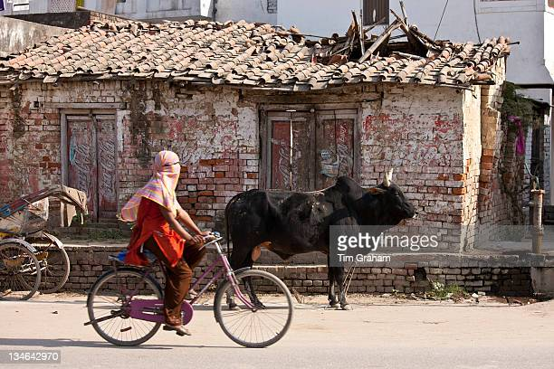 Muslim girl rides past untethered bull in the street in Nandi near Varanasi Benares Northern India