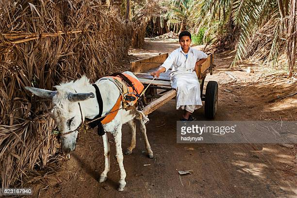 Muslim young boy riding on donkey cart, Siwa Oasis, Sahara