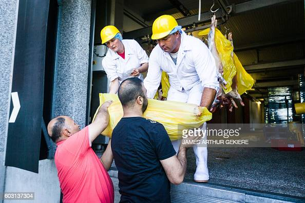 Muslims take away a slaughtered sheep in Zottegem on September 12 2016 ahead of the Aid el Kebir also called Feast of the Sacrifice On AidelKebir...