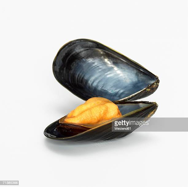 Mussel opend, close-up