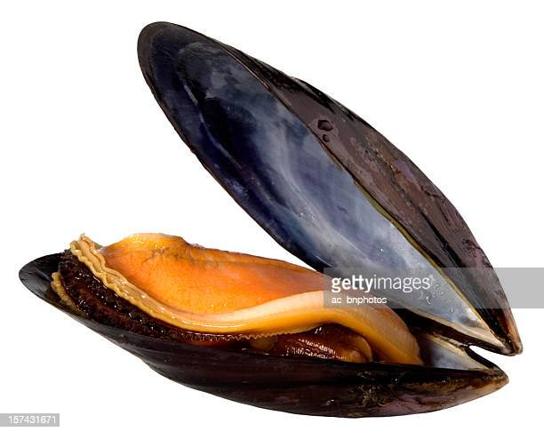 Mussel(clipping path)
