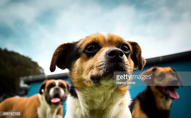Mutt dogs