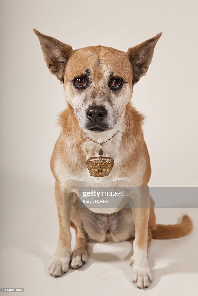 Mutt with Crown : Stock Photo