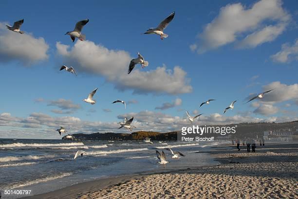 Möwen beim fliegen Ostseebad Binz OstseeInsel Rügen MecklenburgVorpommern Deutschland Europa Ostseeinsel Seebrücke Tiere Tier Meer Wellen Reise AS...