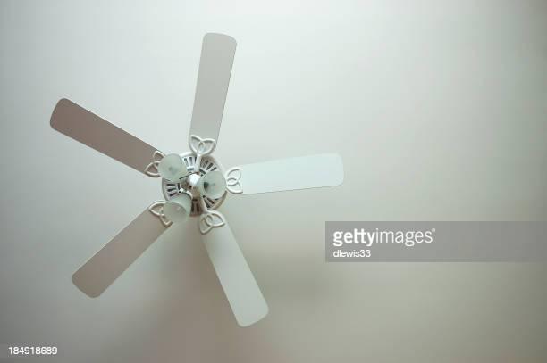 My Biggest Fan
