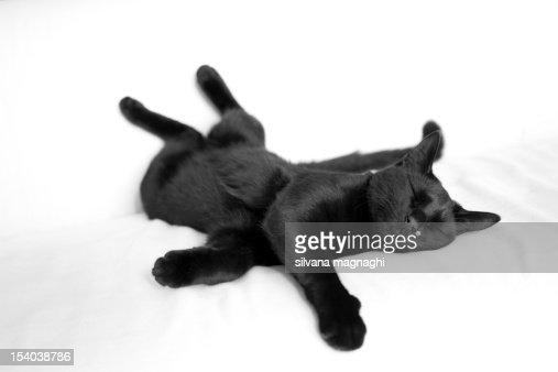 My cat : Bildbanksbilder