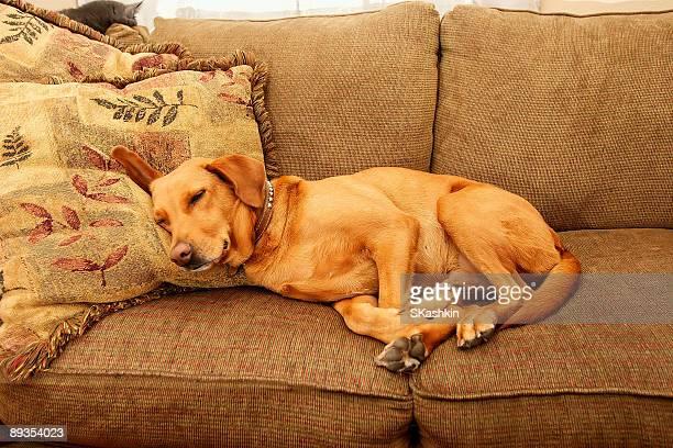 Meinem Couch