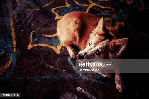 My dog and graphic prints : Stock Photo