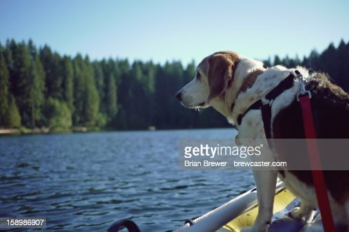 My fearless captain : Stock Photo